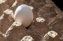 One raw, not broken egg with a white shell Royalty Free Stock Photo