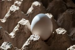 One raw, not broken egg with a white shell Royalty Free Stock Images