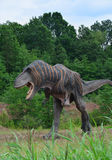 The one of reconstructions of Mesozoic Tyrannosaurus Royalty Free Stock Photography