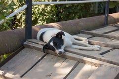 One recumbent dog Royalty Free Stock Photos