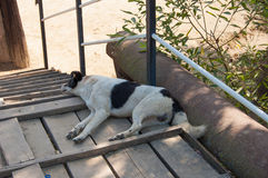 One recumbent dog Royalty Free Stock Photos