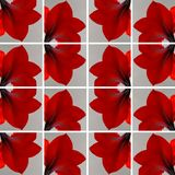 One red Amaryllis flower inside gray squares Royalty Free Stock Image