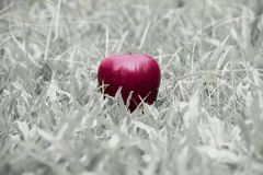 One red apple on black and white grass background Royalty Free Stock Photos