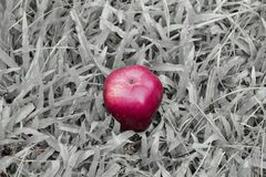 One red apple on black and white grass background Stock Photography