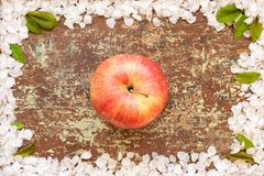 One red apple on wooden table royalty free stock photo