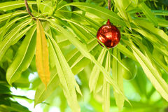 One red ball. Hanging on the tree Royalty Free Stock Photo