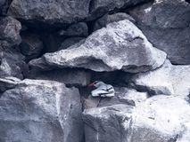 Red-billed tropicbird, Phaethon aethereus, nesting in rock bends. Santa Cruz, Galapagos, Ecuador. One Red-billed tropicbird, Phaethon aethereus, nesting in rock Royalty Free Stock Photos
