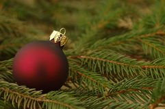 One Red Bulb. One red Christmas bulb on evergreen branches Royalty Free Stock Photo