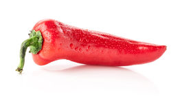 One red Cuban (cubanelle) pepper Royalty Free Stock Photo