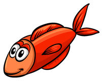 One red fish. On a white background Royalty Free Stock Image