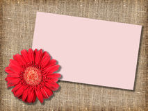 One red flower with message-card Stock Photos