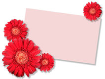 One red flower with message-card Stock Photography