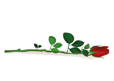 One red flower. Rose lies. Greeting card for Valentine`s Day. Wedding and birthday. Empty space for your text or advertisement. Vector illustration on white Royalty Free Stock Photography