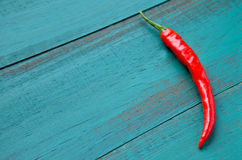 One Red Hot Chili Pepper Stock Image