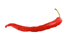 One red hot pepper Royalty Free Stock Photo