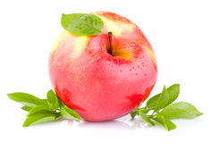 One red juicy apple with green leaves and drops Stock Photo