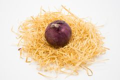 Onion on the nest with  white background stock images