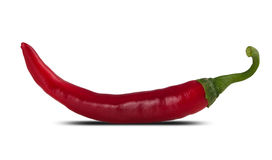 One red pepper Stock Images