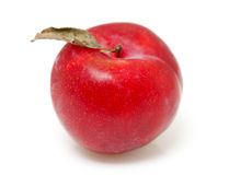 One red plum Stock Photography