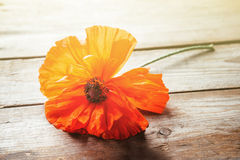 One red poppy Stock Photo
