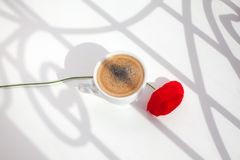 One red poppy flower on white table background with sun light and shadows close up top view in morning sunlight stock photos