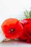 One red poppy flower Stock Image
