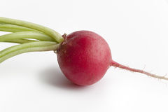 One red radish, Raphanus sativus Royalty Free Stock Photo