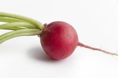 One red radish, Raphanus sativus. On white background Royalty Free Stock Photo