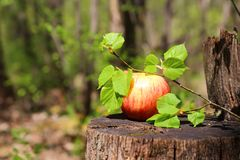 One red ripe juicy apple lies on a wooden stump with a lime tree royalty free stock photo