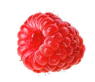 One red ripe raspberry fruit Stock Photography
