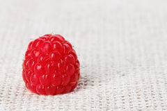 One red ripe raspberry fruit, on gray linen Stock Image