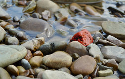 One red river stone among big amount of grey river stones Stock Images