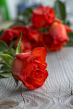 One red rose with a bouquet. As background Royalty Free Stock Photo