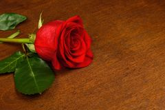 One red rose on a dark background. Royalty Free Stock Photography