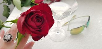 One red rose in female fingers wearing silver ring with white big stone stock images