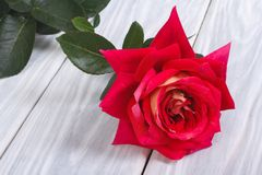 One red rose flower on a  table Royalty Free Stock Photography