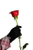 One red rose in hand Royalty Free Stock Photo