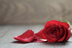 One red rose on oak wood table Stock Photos