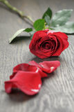One red rose on oak wood table Royalty Free Stock Image