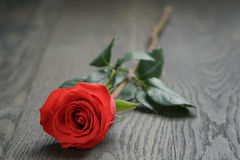One red rose on oak wood table Stock Photography