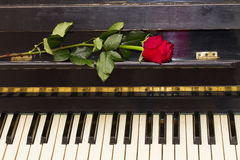 One red rose  on piano Royalty Free Stock Photography