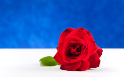 One red rose on white table Royalty Free Stock Photo