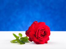 One red rose on white table Stock Photography
