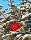One red star on branch fir Stock Image