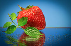 One red strawberry Stock Photography