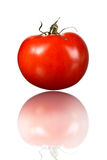 One red tomato and its reflection. Red shiny tomato vertically isolated on white background Stock Image