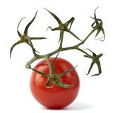 One red tomato with stem Royalty Free Stock Photography