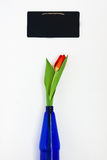 one red tulip in the blue vase and chalk board for notes isolate Stock Photo