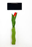 One red tulip in a vase and green chalk board for notes isolated. On white background Stock Image