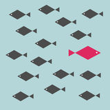 One red unique different fish swimming opposite way of identical black ones. Courage, confidence, success, crowd and creativity concept Stock Photos